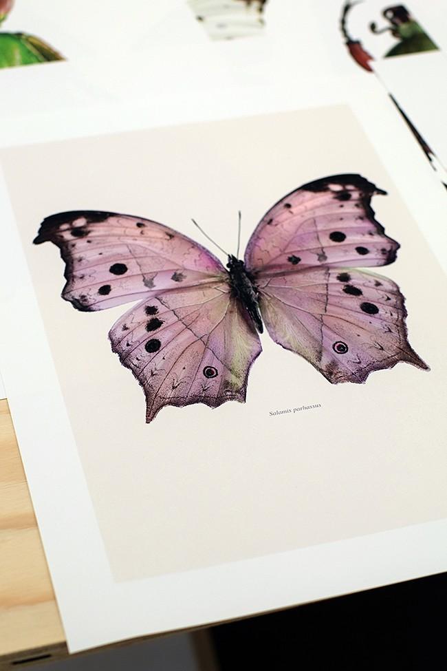 Liljebergs fjärils- och insektsprints